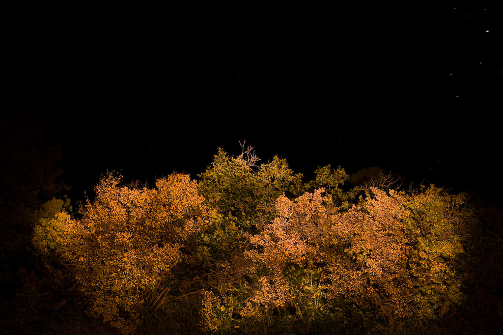 NIKON D700 @ 35mm ISO 200 30/1 f/6.3 & Low Light Photography Tips - Photography Life
