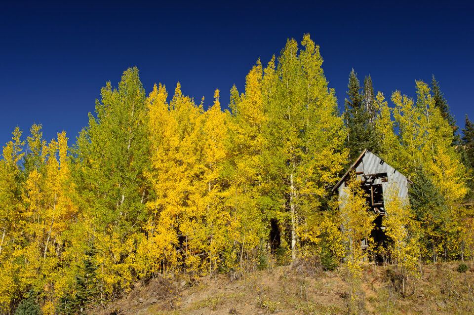 Aspens and an old building