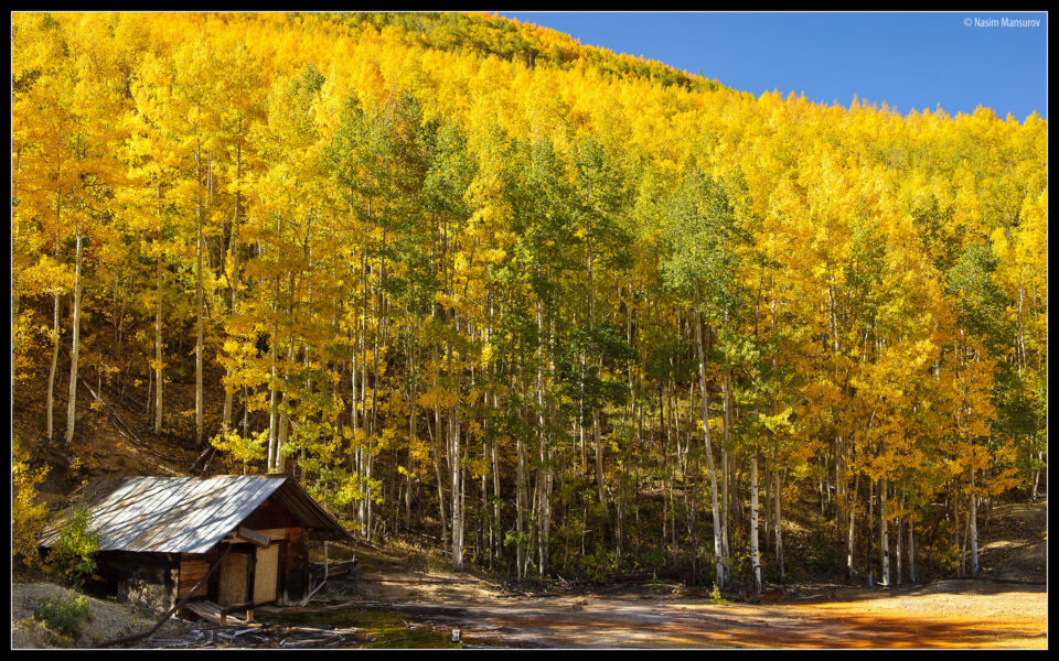 Aspens with Abandoned House