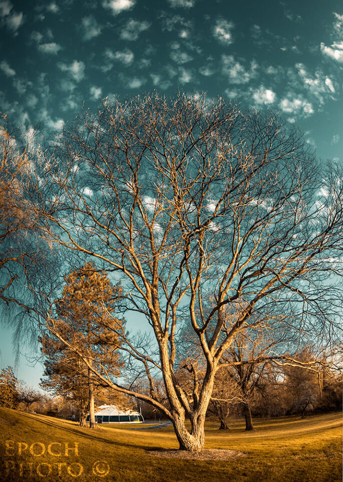 Tree-&-Clouds