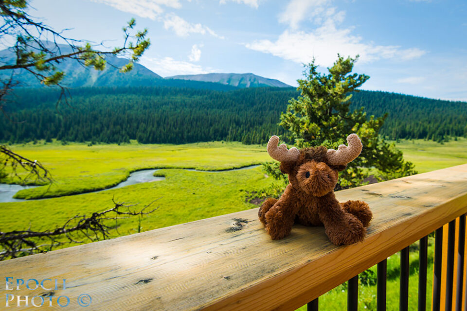 Moose-Meadows-2