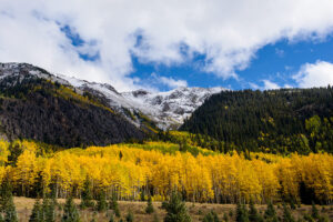 Photographing Aspens in Colorado