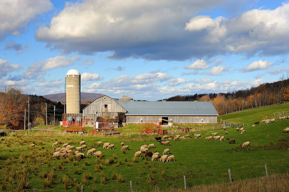 Sheep farm at Iron Hill in the Eastern Township @ f/8