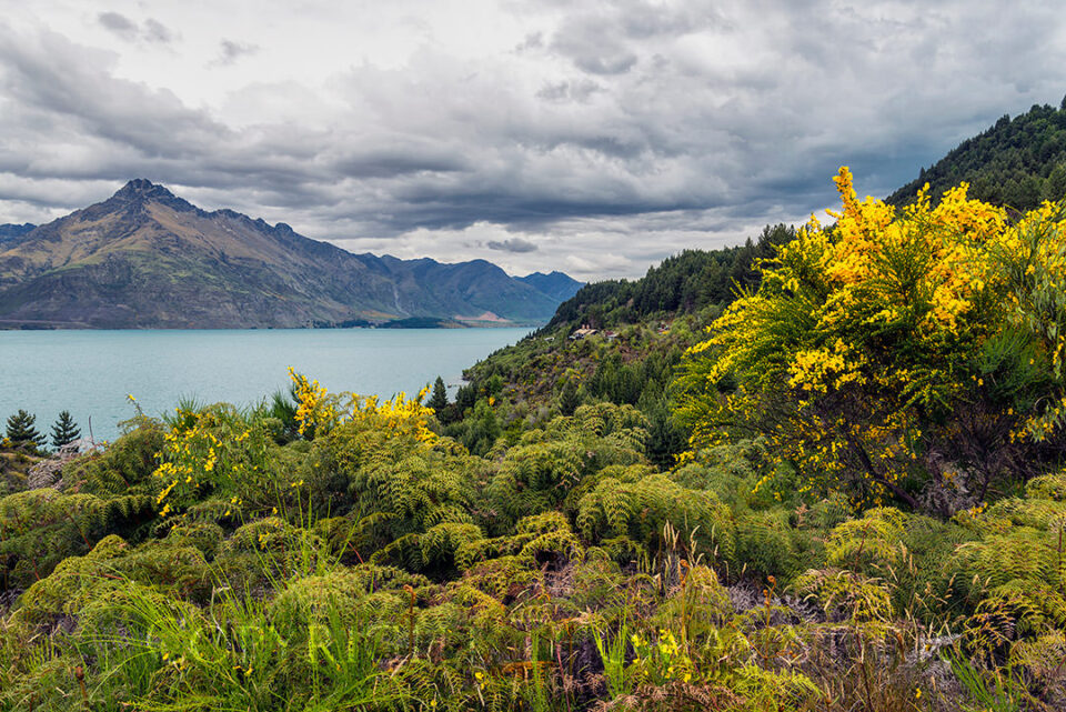 Queesntown to Glenorchy