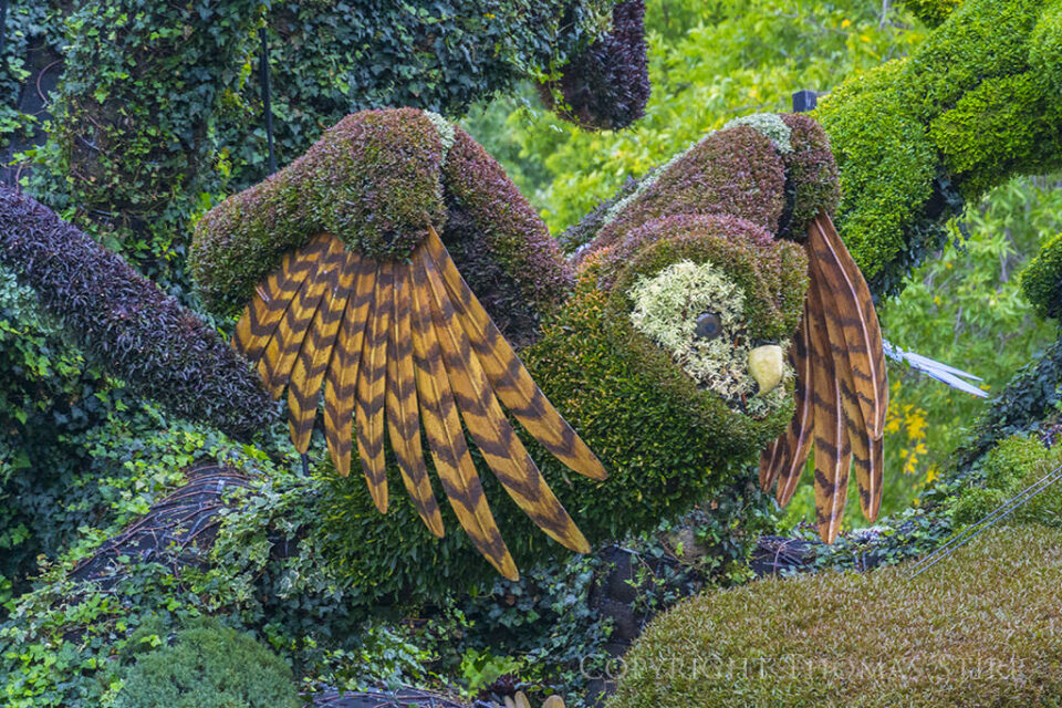Mosaiculture (1)