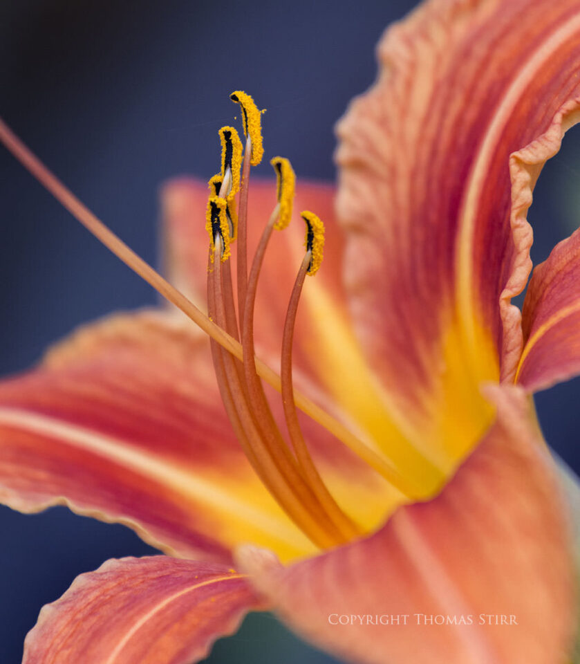 Thomas Stirr Flower Photography (3)