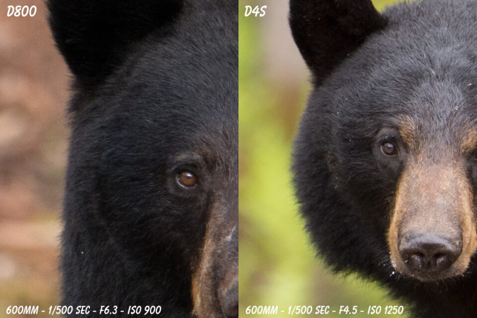 D4s versus D800 Sample