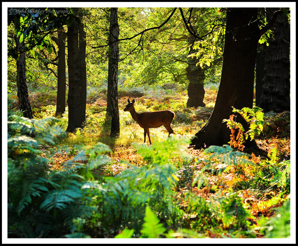 9 Deer Richmond Park