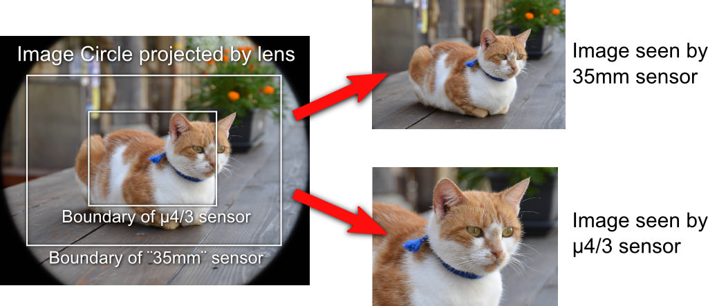 Sensor Size, Perspective and Depth of Field - Photography Life