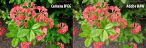 How to Get Accurate Fuji Colors in Lightroom