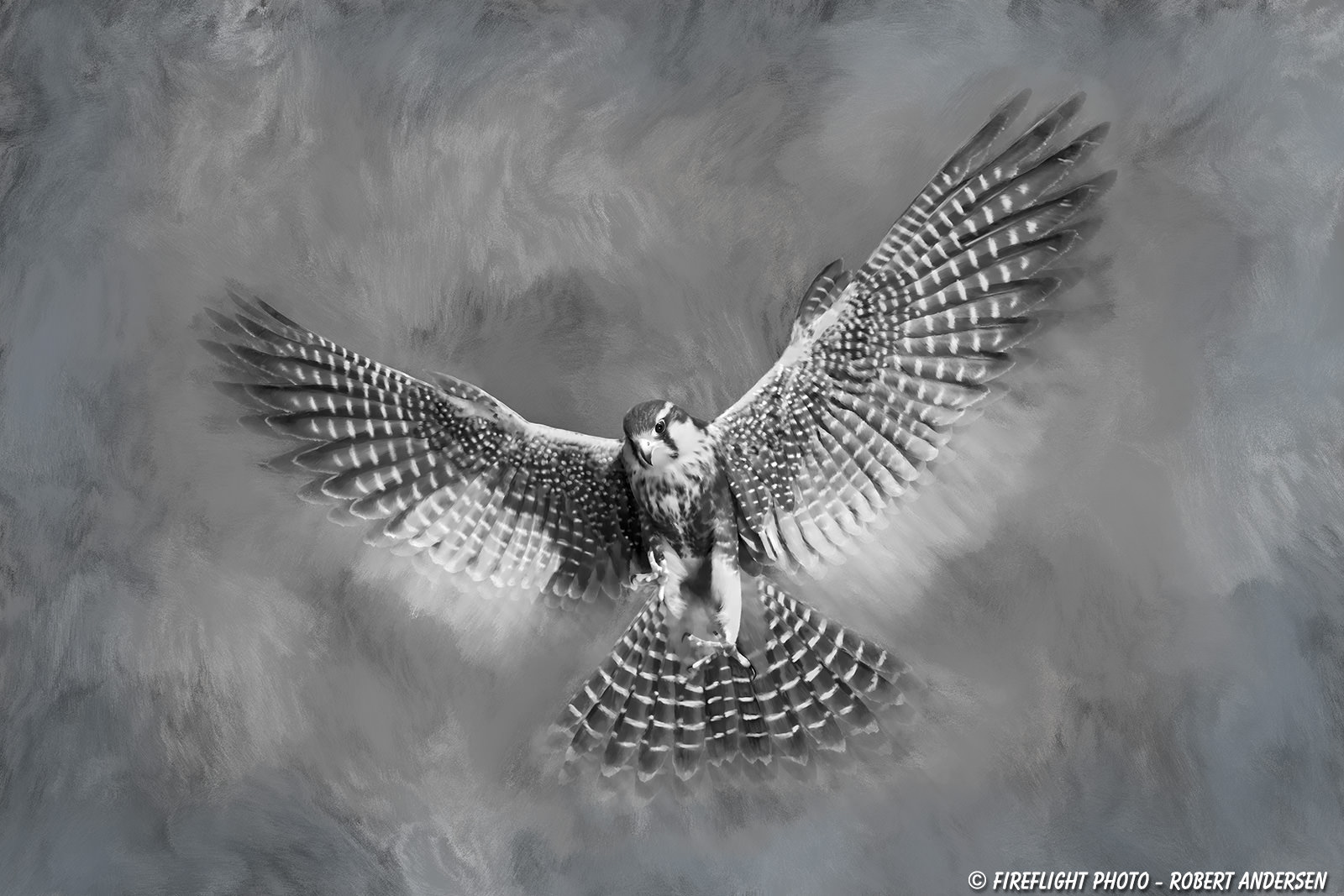 Turn your photo into an artwork photography life aplomado falcon painted final painting baditri Image collections