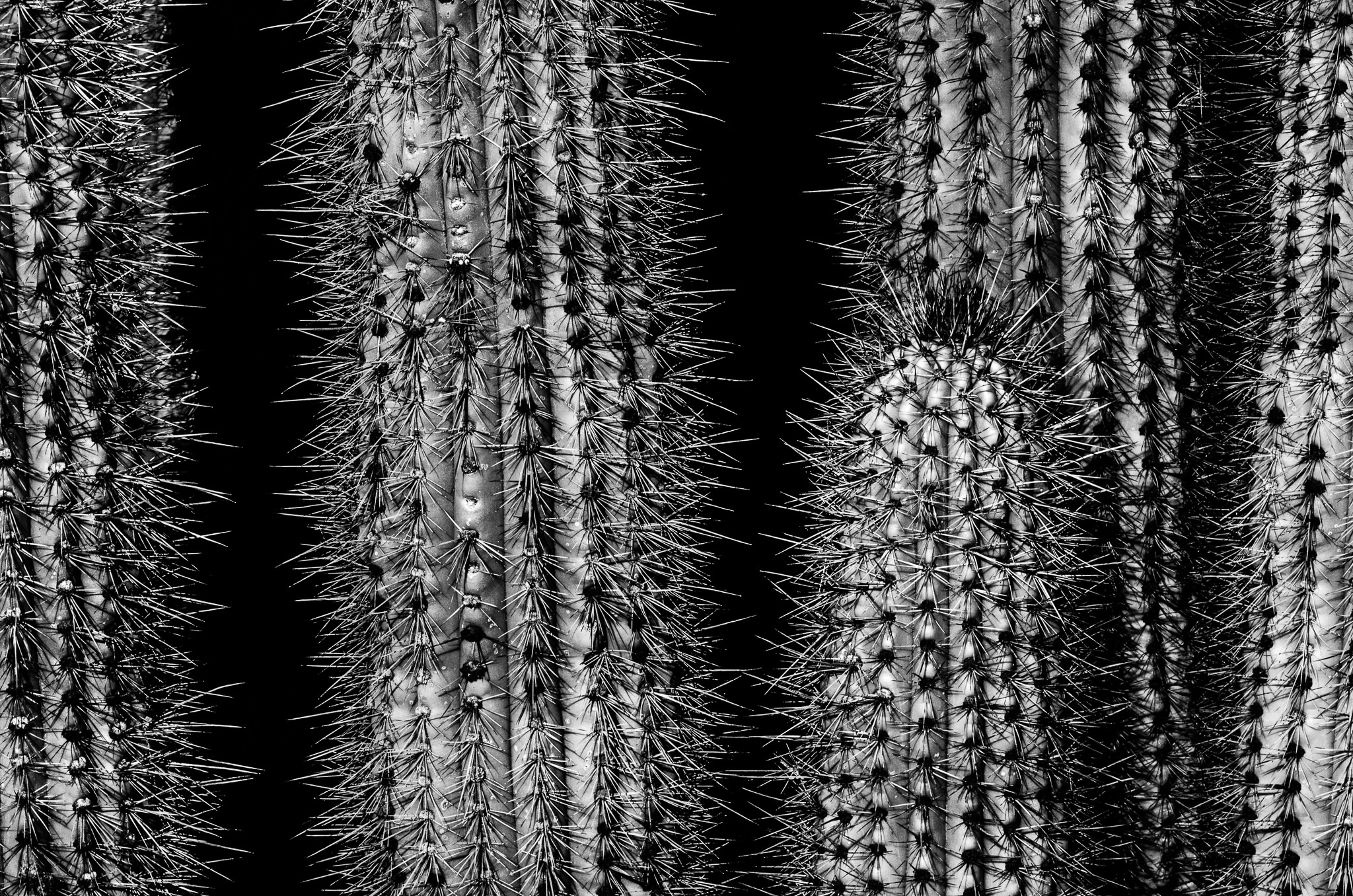Introduction to black and white nature photography texture voltagebd Images