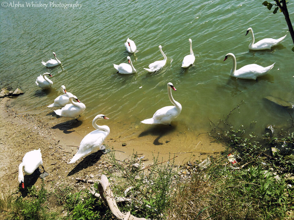 9 Swanning in Slovakia