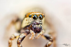 High Magnification Macro Photography on a Budget