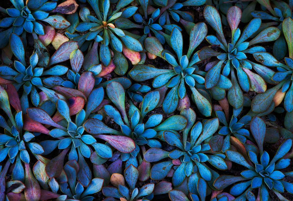 Six Tips for Better Photographs of Plants