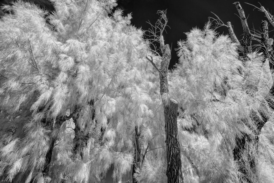 Death Valley Infrared (12)