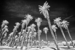Death Valley Infrared (18)
