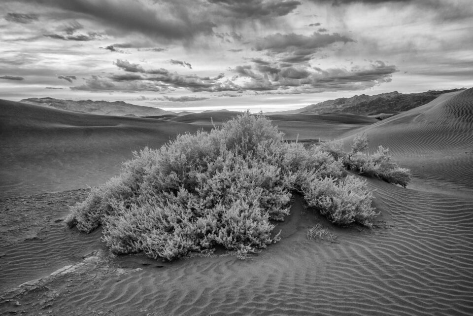 Death Valley Infrared (4)