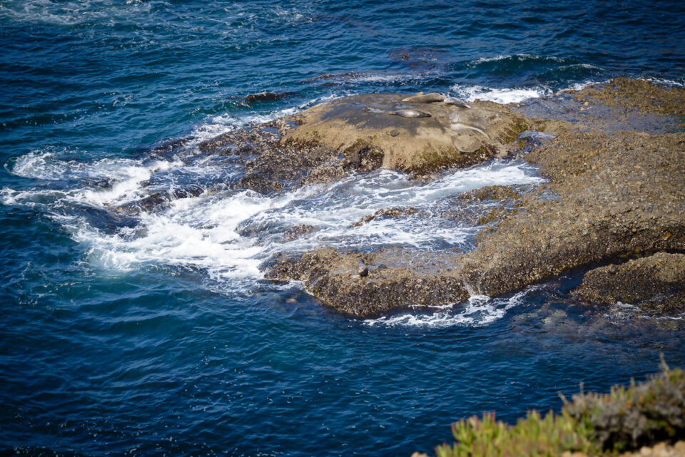 Point Lobos State Reserve #5