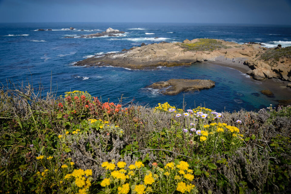 Point Lobos State Reserve #2