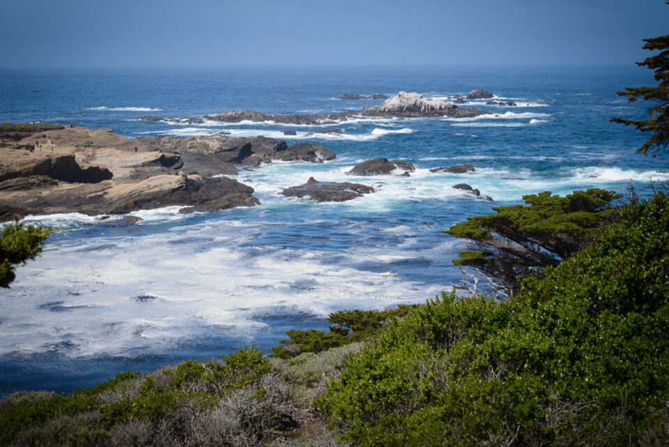 Point Lobos State Reserve #7