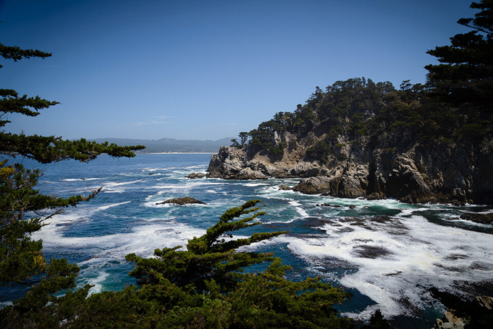 Point Lobos State Reserve #3
