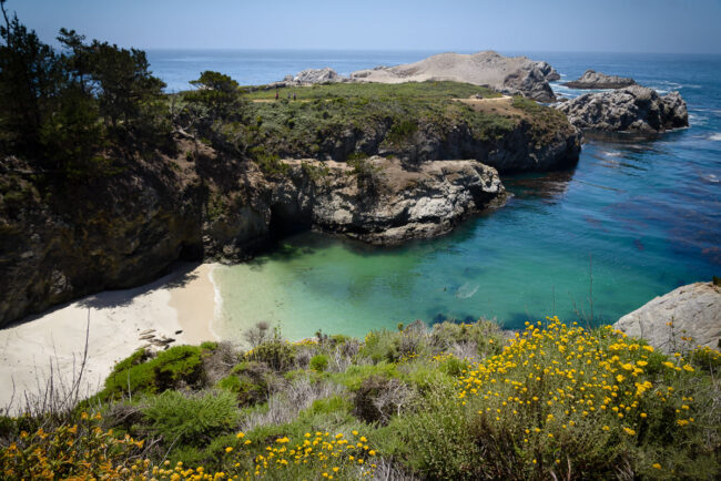 Point Lobos State Reserve #1
