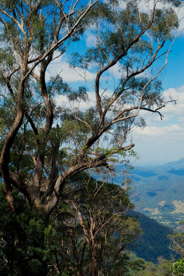 Wollumbin - Mount Warning #5