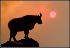 Mountain Goat Silhouette by Russ Burden
