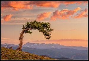 Mount Evans and Garden of the Gods Tour – Only 2 spots left