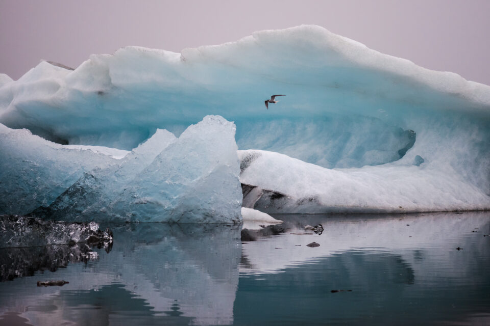 Blue Ice and Seagull