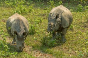 Chitwan National Park #1