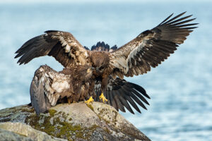 Super Telephoto Wildlife Photography – The Good and the Bad