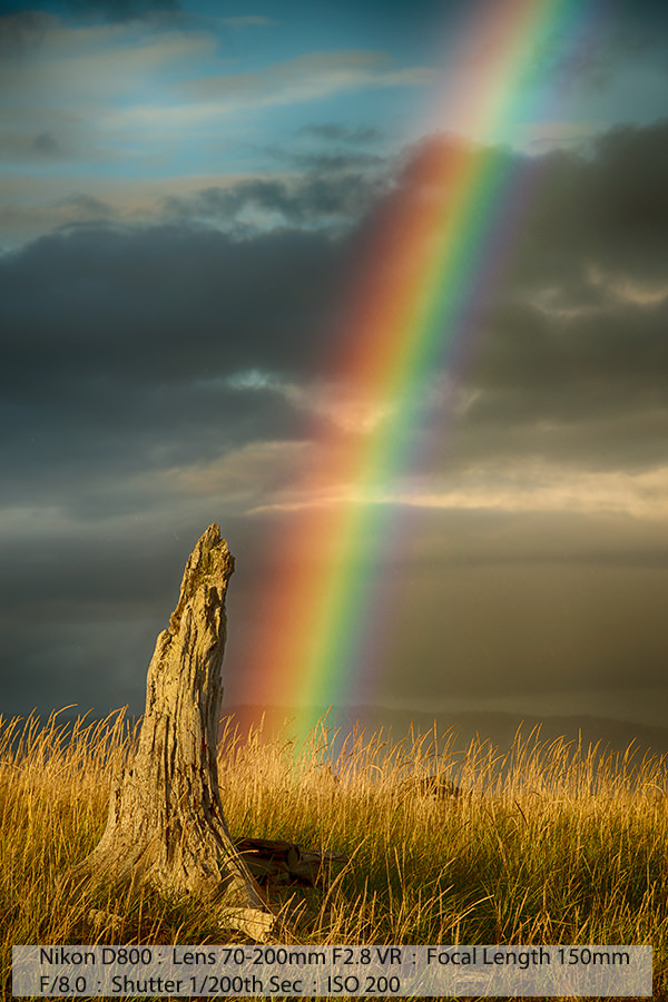 Rainbow Over Dead Stump Homer Alaska