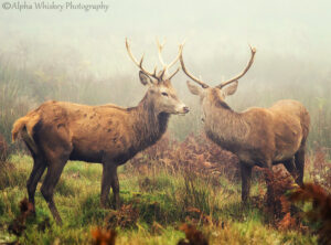 In The Company Of Deer
