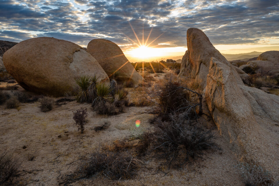 Joshua Tree NP Sunburst
