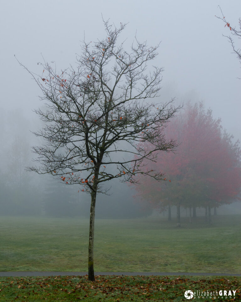 Foggy Tree Intruder