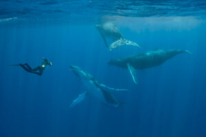 Photographing the Humpback Whales of Tonga