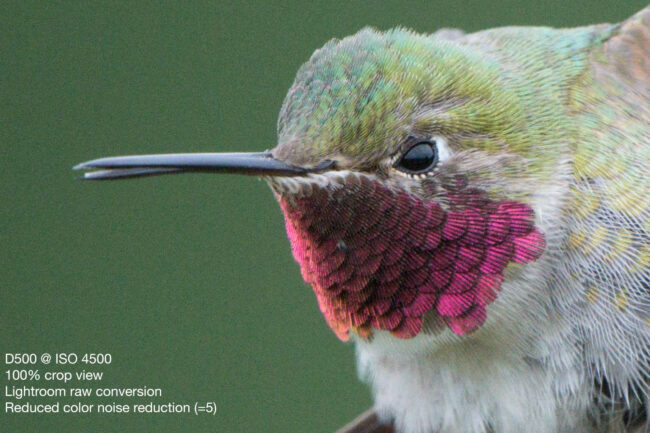 Broad-tailed Hummingbird - Nikon D500, 500mm f/4 + 1.4x T.C., ISO 4500 1/2000s f/10