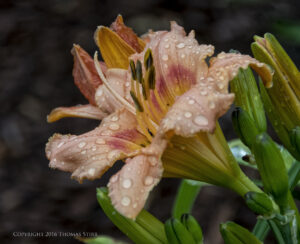 after the rain 14