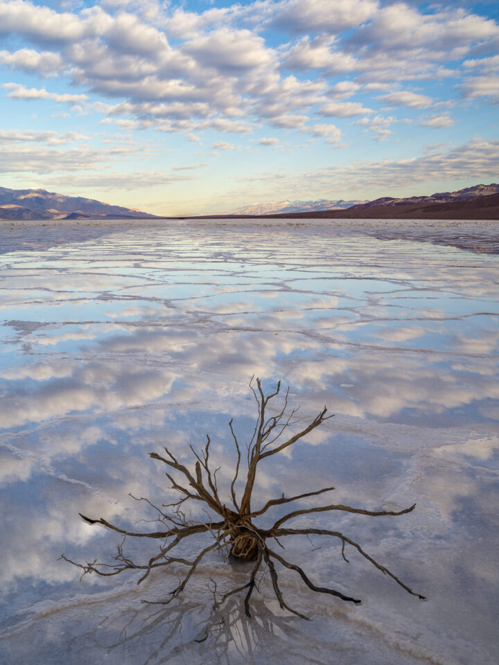 Badwater Dead Plant