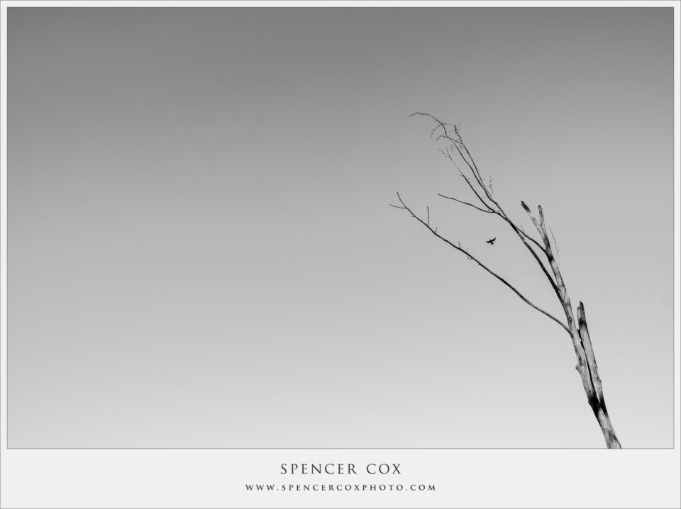 Spencer-Cox Negative Space