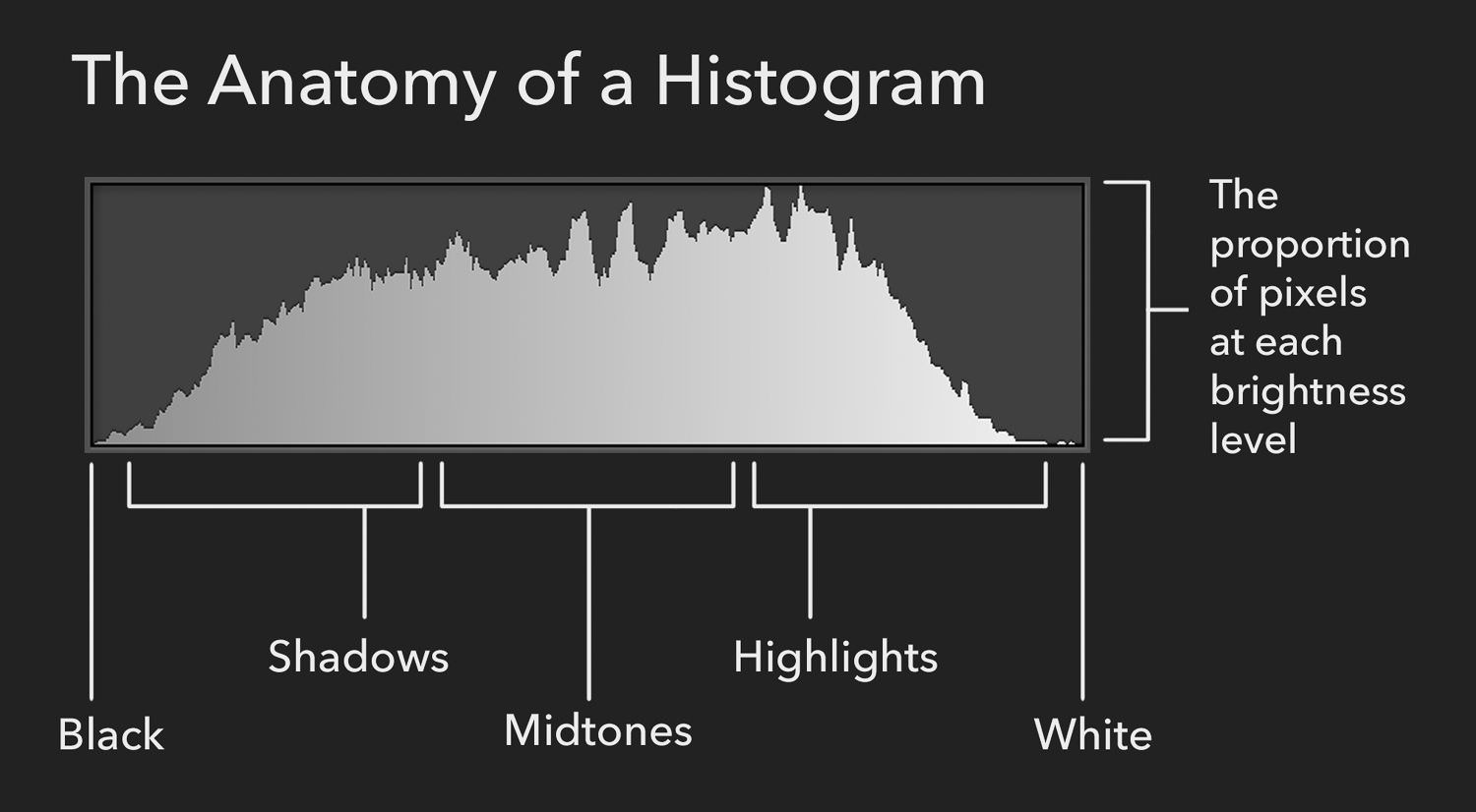 What Are Histograms? A Photographer's Guide