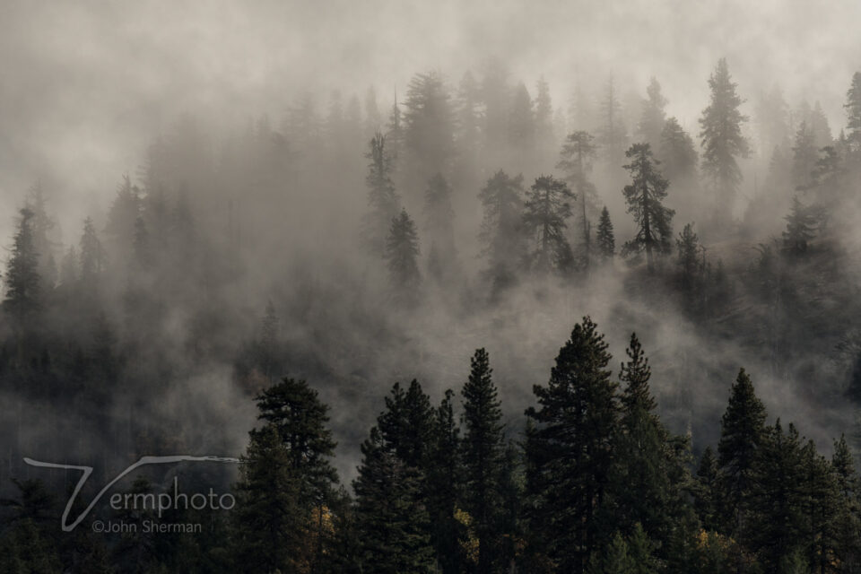 Verm-mist-in-trees-Yosemite-1245