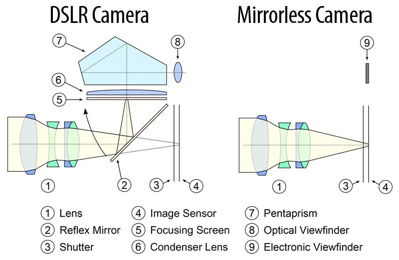 DSLR Compared to Mirrorless Camera