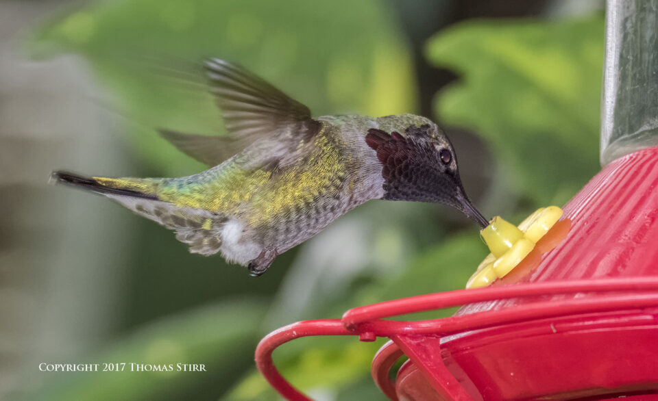 hummingbird V3 flash 4
