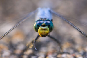 How to Focus in Macro Photography