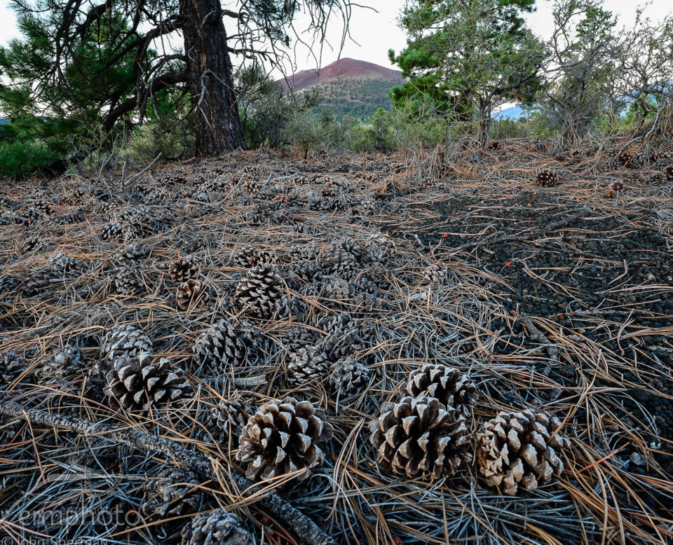Focus stack of pine cones on the ground