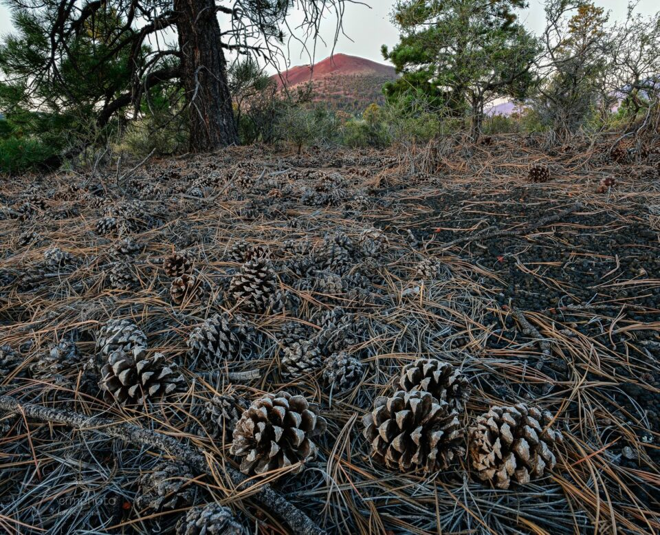 Pine cones and sunset crater
