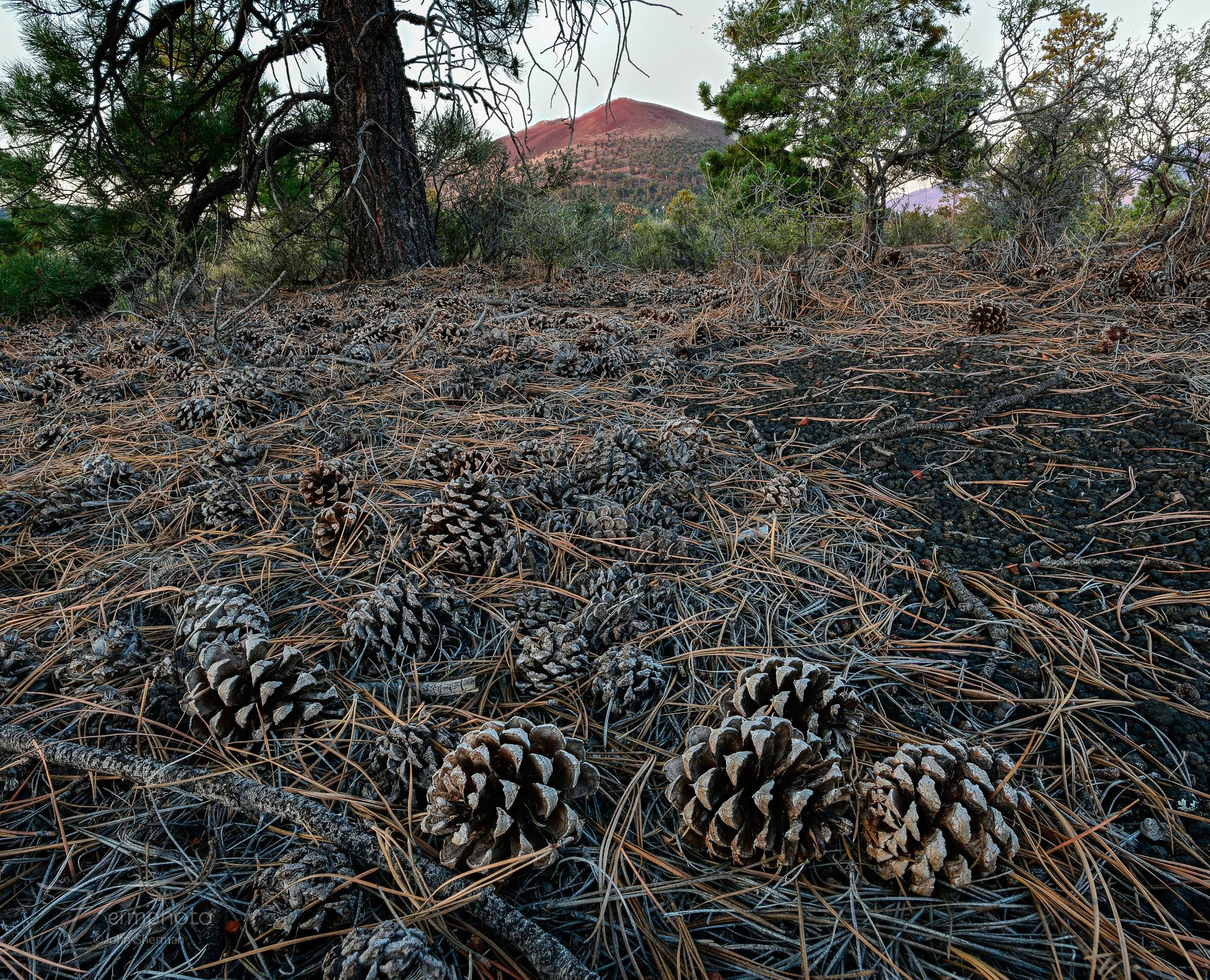 pine cones and sunset crater 2 (C)